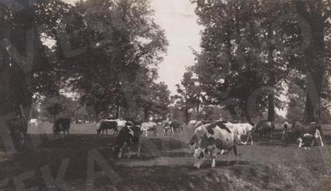 Kauno ąžuolynas – šimtametis gamtos paminklas
